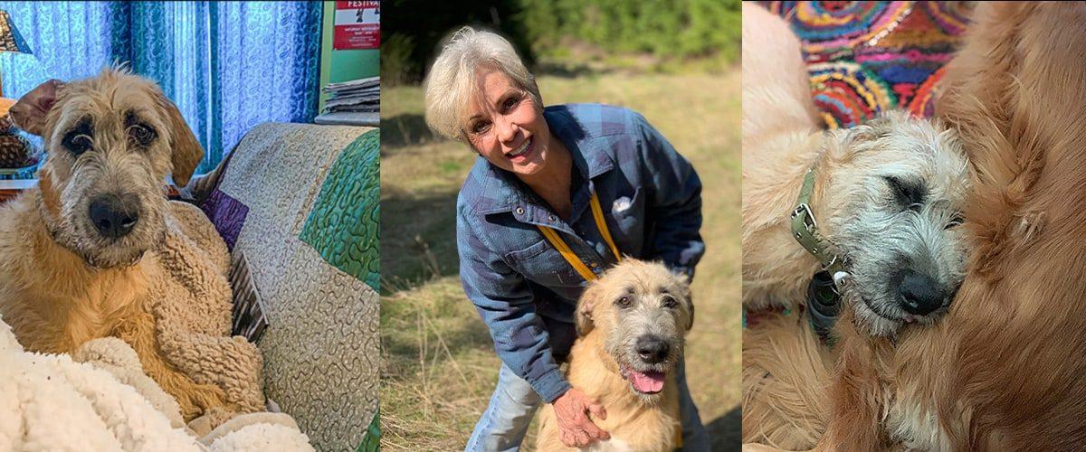 Dragon Vineyard's newest member, Teagan the Irish Wolfhound